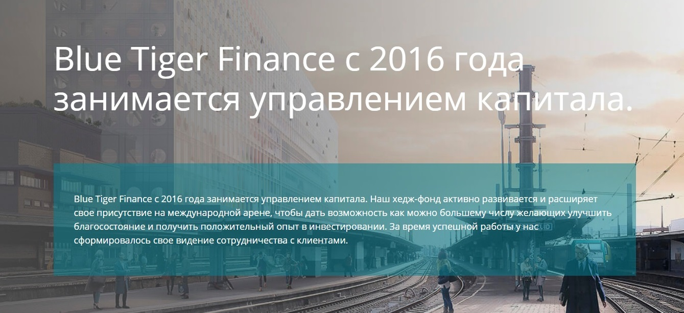 Главная страница сайта Blue Tiger Finance
